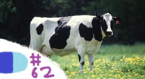 cowheaderKT52
